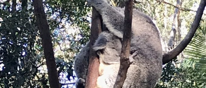 julieschooler.com - blog - 3 troubling observations from a social media detox - Baby Koala
